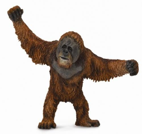 Орангутан L (1)