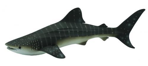 Китовая акула XL (1)
