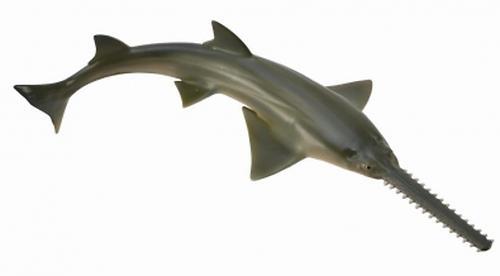 Рыба-пила M (1)