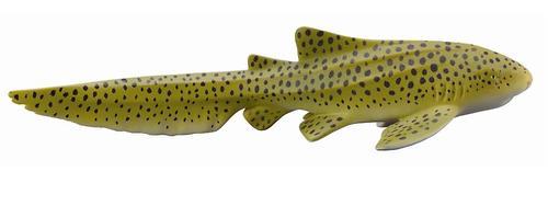 Зебровая акула M (1)
