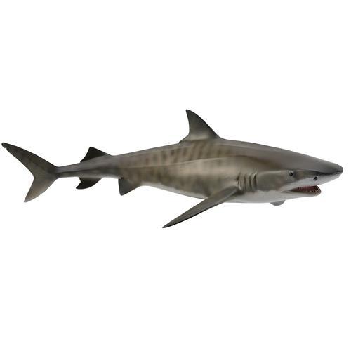 Тигровая акула L (1)