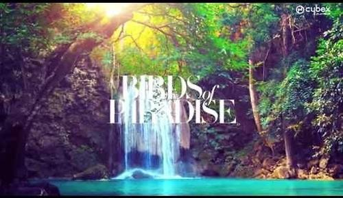Люлька для коляски Cybex Priam Birds of Paradise (6)